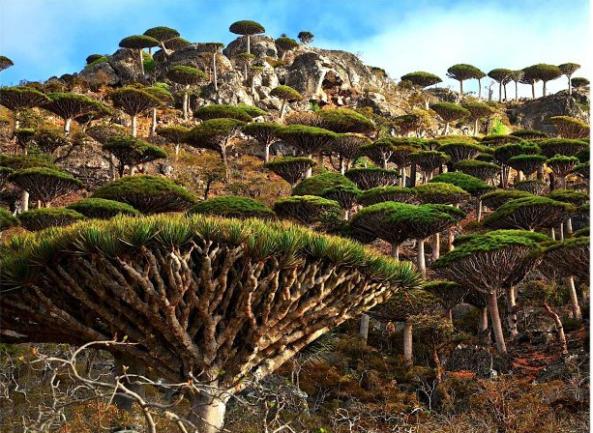 Socotra, Yemen IV