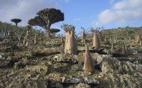 Socotra, Yemen VI