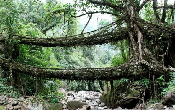 Living Bridges of Cherrapunji, India I