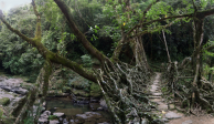 Living Bridges of Cherrapunji, India VI